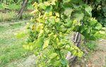 Bayer szimpózium Akasztón – Fontos újdonságok a szőlővédelemben