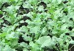 Kipróbált növényvédelmi megoldások repcében