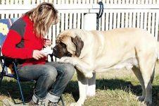 A kutya ragaszkodása az emberhez
