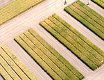 A búzanemesítés a hazai mezőgazdasági kutatás nemzetközileg is legversenyképesebb területe
