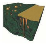 Adrenalin a gombaölő szereknek, avagy hogyan fokozzuk a fungicidek hatását