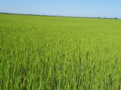 A termésnövelő anyagok engedélyeztetésének gyakorlati szempontjai
