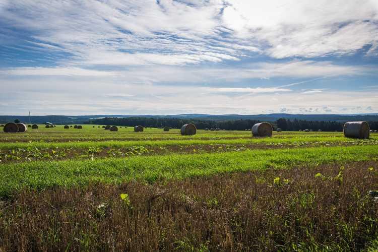 Az intenzív mezőgazdasági termelés a talajok minőségét rontja, amit az éghajlatváltozás tovább fokoz. Ennek a folyamatnak az eddigieknél is kiszámíthatatlanabb lesz a hatása