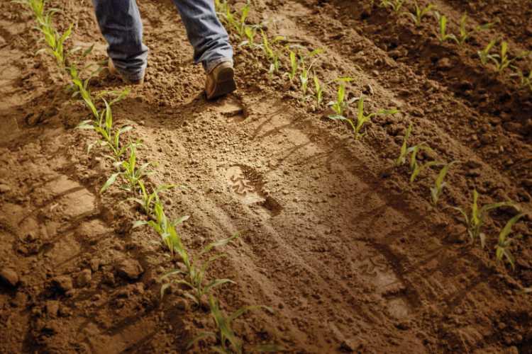 A Bayer kötelezettséget vállalt, hogy agronómiai ismereteket, eszközöket és partnerséget kínálva 100 millió kisgazdát támogasson világszerte