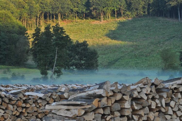 erdőbitokosság