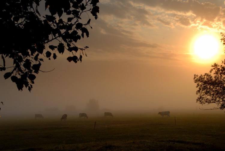húsmarhák ősszel