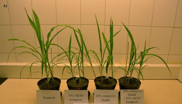 tesztnövények