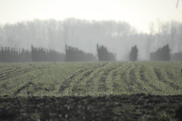 földterület