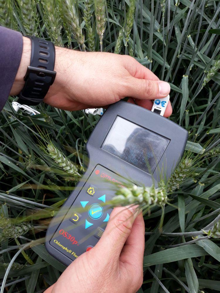 A növény fotoszintetikus hatékonyságát mutatja a klorofill fluoreszcenciát mérő műszer