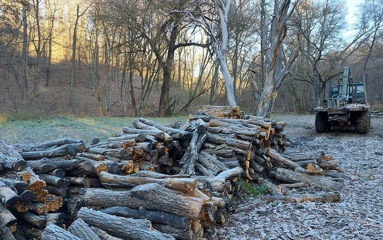 Négy módszer az osztatlan közös erdők felszámolására