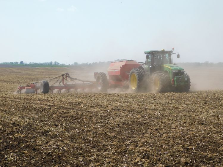 Kukorica magágykészítése és vetése rozstarlóba