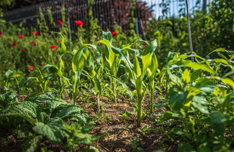 Okszerű használatuk sokat segíthet talajmegőrző céljaink elérésében
