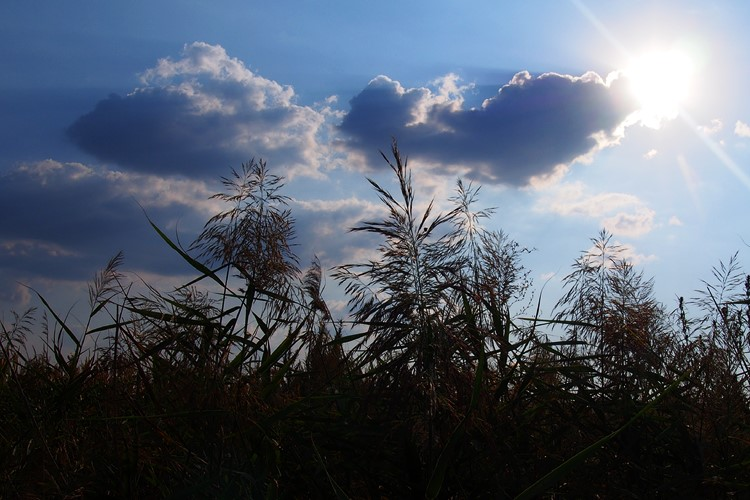 Időjárás és agrárium
