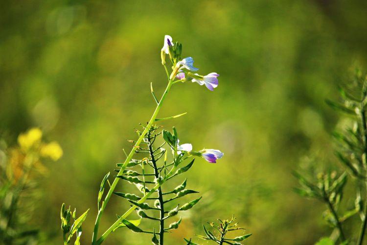 A köztesnövények nem csodanövények, a helytelen agrotechnikát és termesztéstechnológiát nem ellensúlyozhatják