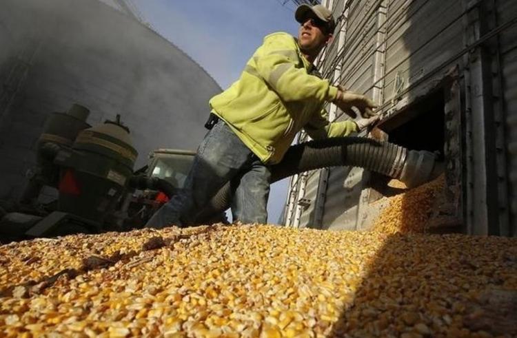 brazil kukoricabetakaritas