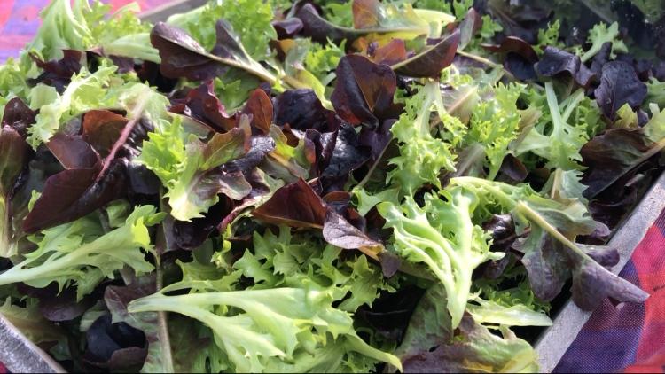 Újságajándékból vegyszermentes salátakert