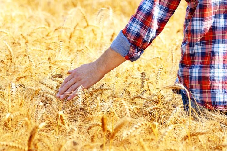 Mezőgazdaság, gabonafélék piaca