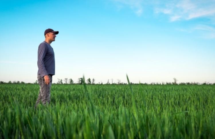 búza farmer