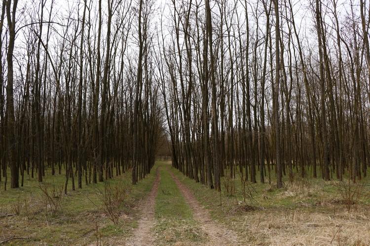 Mezőgazdaság, erdőgazdálkodás