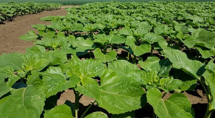 Yara lombtrágya a mezőgazdaságban