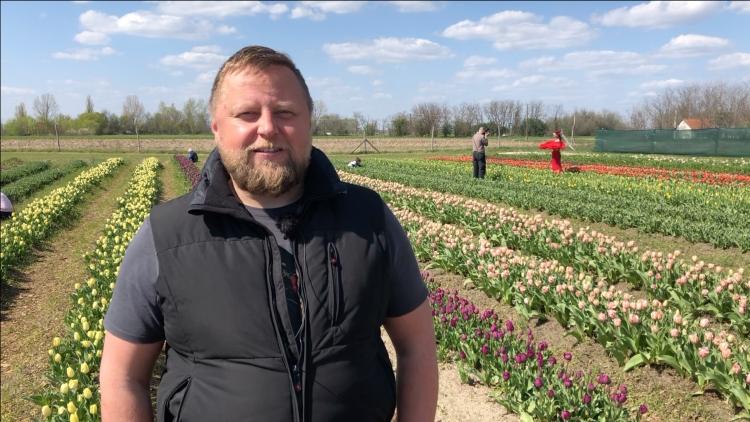 Major Zoltán, a Mórahalmi TulipGarden létrehozója, (fotó: Kristóf Imre)