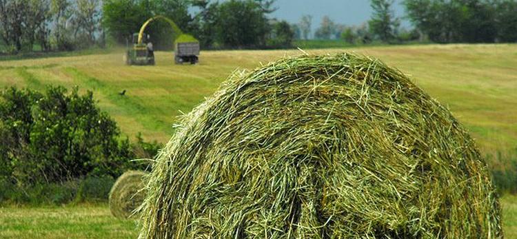 Mezőgazdaság, lucernafeldolgozó
