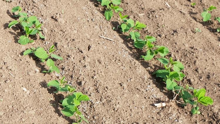 Mezőgazdaság, Yara termékek vetés után