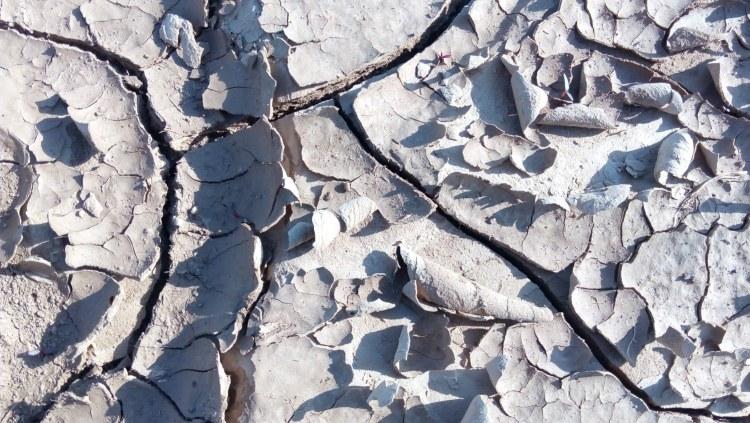 cserepesedett talaj