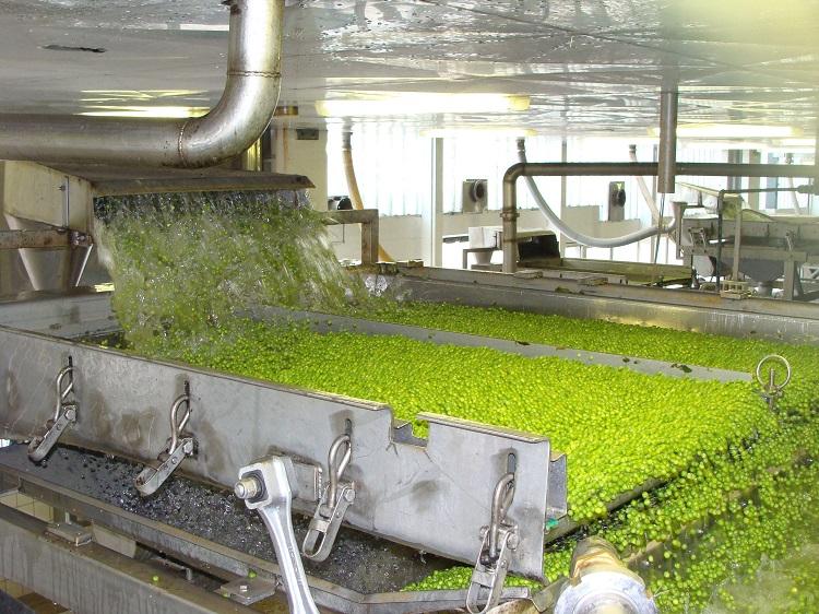 borsó konzervgyár mezőgazdaság