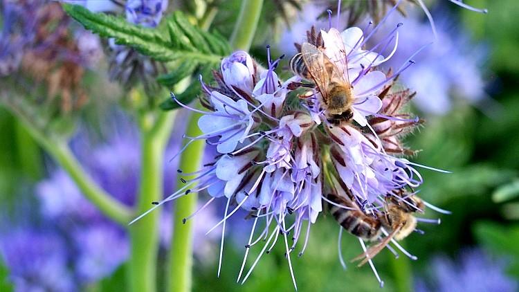 Mezőgazdaság, méhek