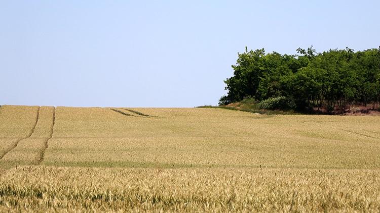 Mezőgazdaság, termőföld