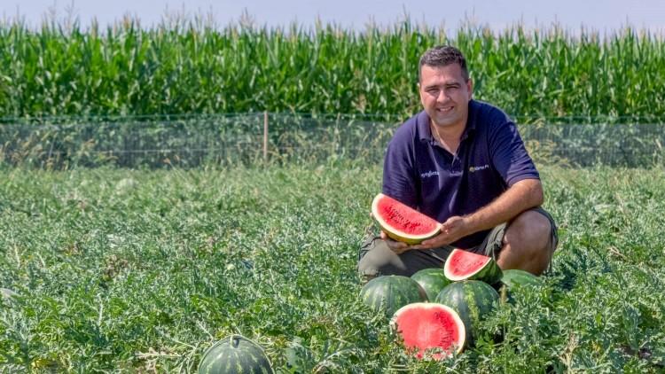 Mezőgazdaság, dinnye