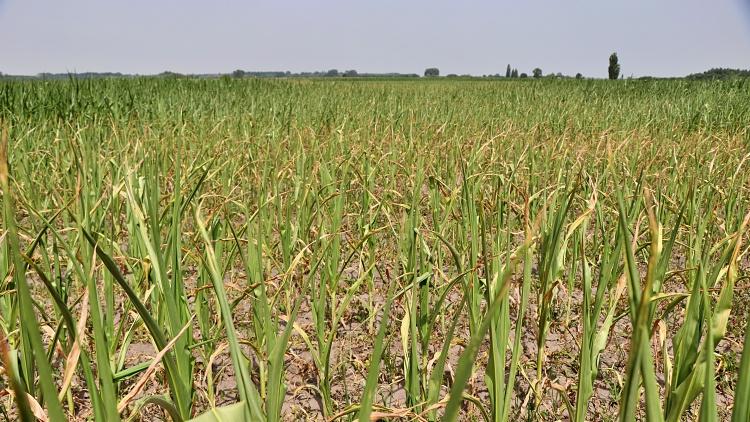 Mezőgazdaság, takarmány
