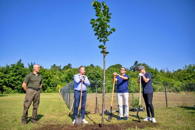 Fásítás a Normafánál, az erdő csökkenti a szélsőséges időjárás hatásait