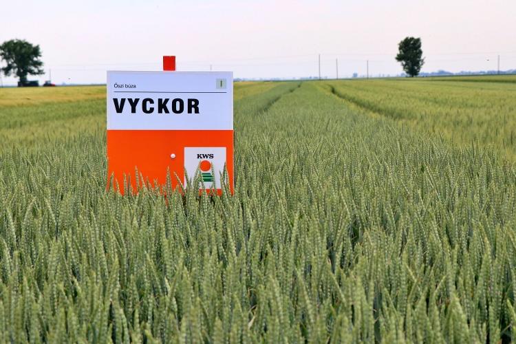 Mezőgazdaság, mennyiség és minőség