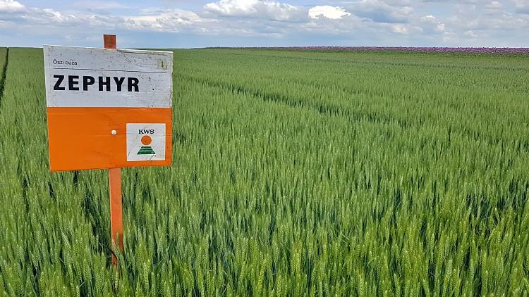 Mezőgazdaság, extenzív fajták