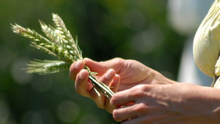 Enyhén nőtt a mezőgazdaságban dolgozók száma
