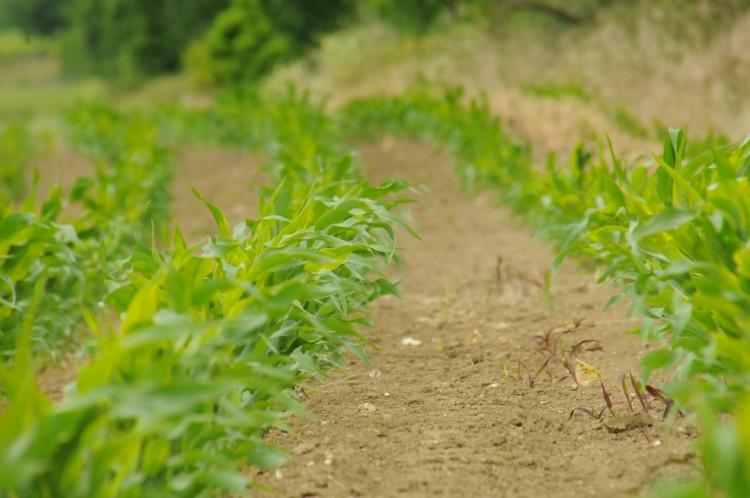 """Érdekeltté lehet tenni a gazdálkodókat , hogy """"áldozatokat"""" hozzanak a fenntarthatóságért"""
