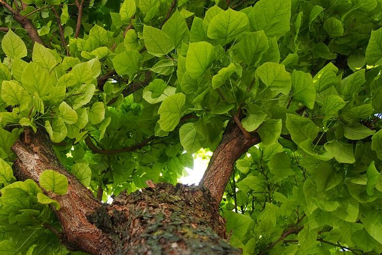 Mezőgazdaság, erdő, klímaváltozás