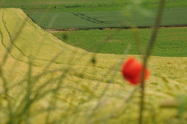 biodiverzitás szántó